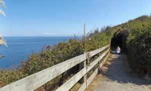 Dungeness Recreation Area Trail